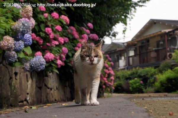 2016062216花に猫を添える。4