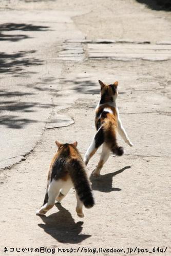 守りたい。その5 さいちゃん 三毛ネコ(トリミング)