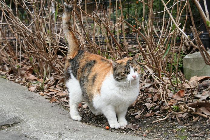 外のネコ観察。その2