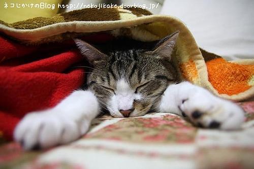 おやすみ。