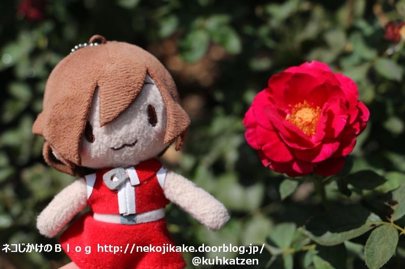 2020081805バラが咲いた。