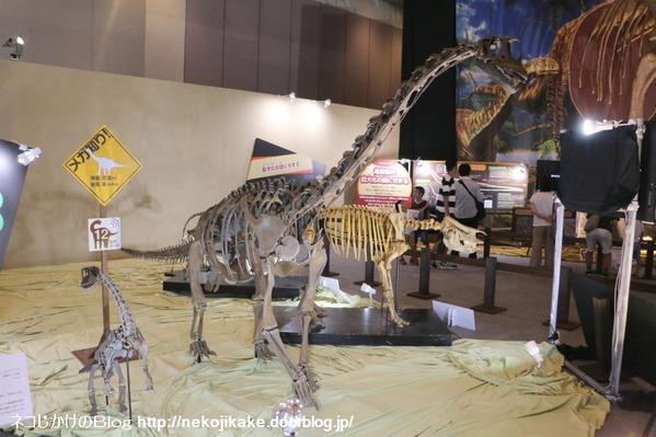2017073015メガ恐竜展201@ 大阪南港ATCホール。13