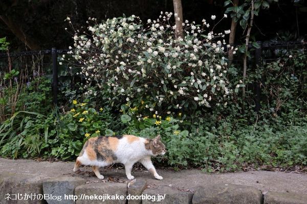 2015033105花見。1