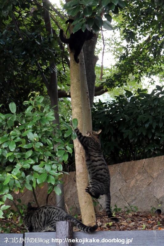 2015102203猫はおだてなくても木に登る。