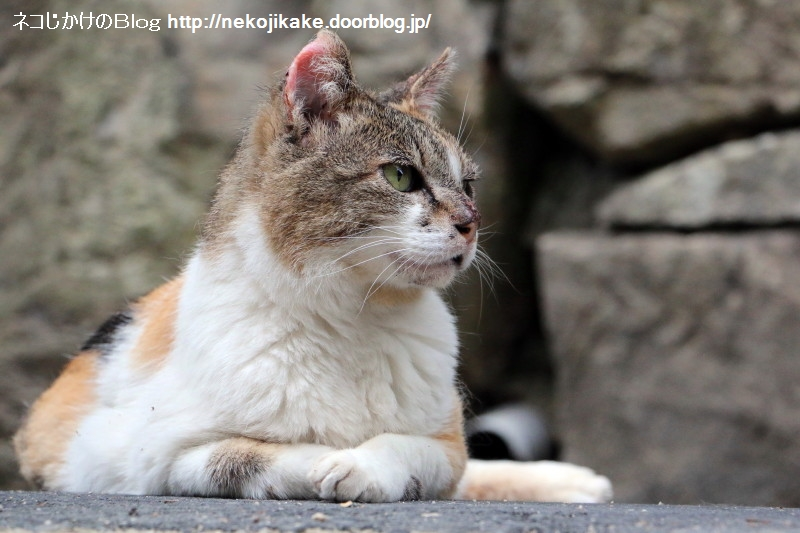 2015060205くつろぎの猫。4