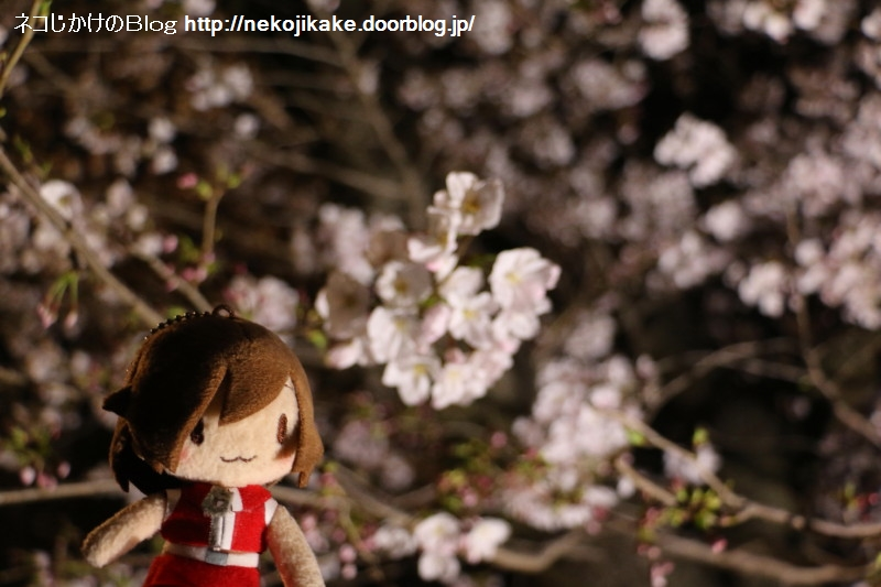 2019040302夜桜MEIKO。