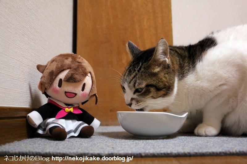2017110505いっぱい食べる猫が好き。
