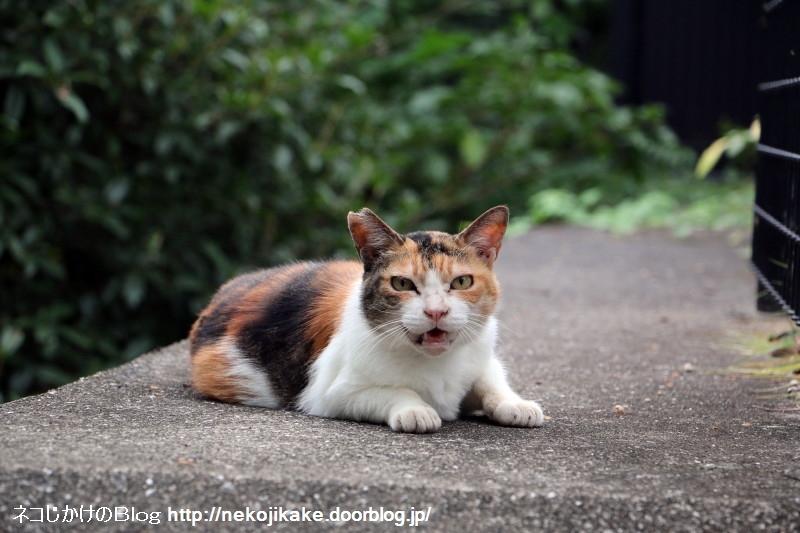 2015090508猫はココにいる。2