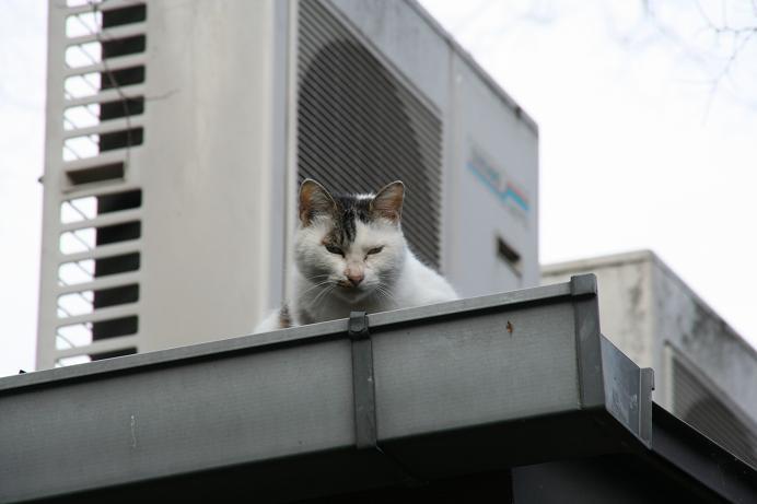いい天気でネコもご機嫌。その2