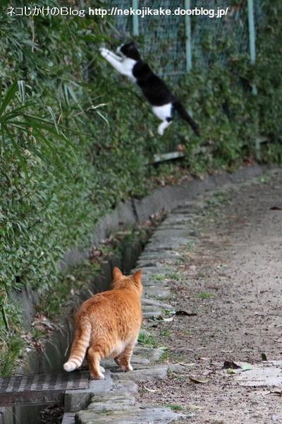 2016013014白黒の子猫。1