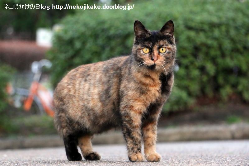 2015031907猫つながり。6