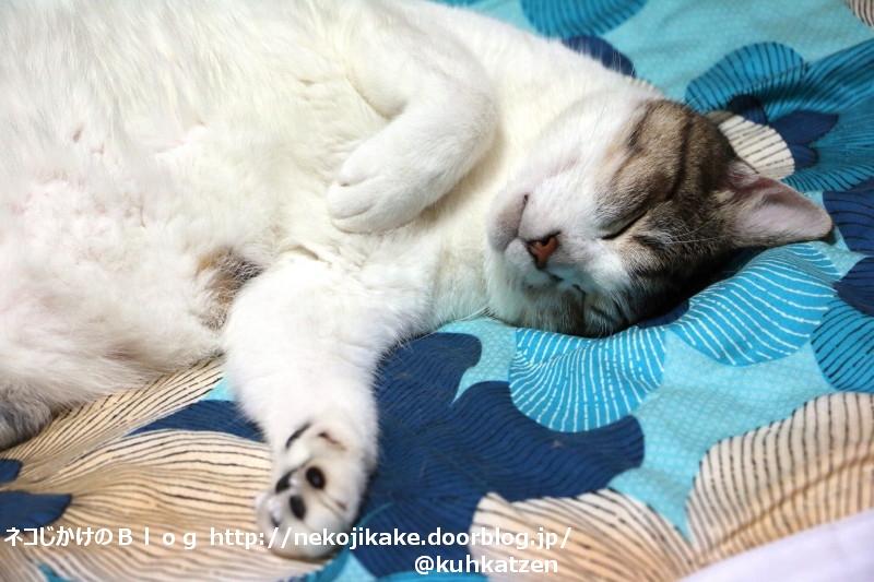 2020072904よく寝る猫は育つ。2