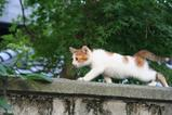 子ネコが歩く。その2