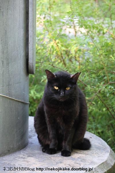 2016060111黒ネコ。2