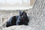 お日様の下のネコ。その3