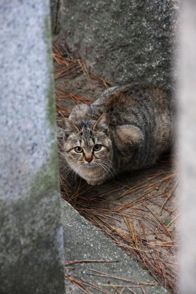 見つかった。キジトラ子ネコ