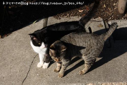 オーバと猫先輩。その1 オーバ 猫先輩