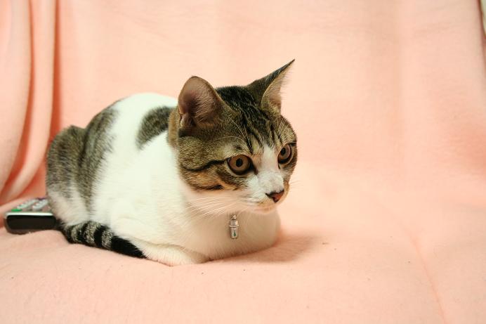 ネコパンチを甘く見るなよ。シマ