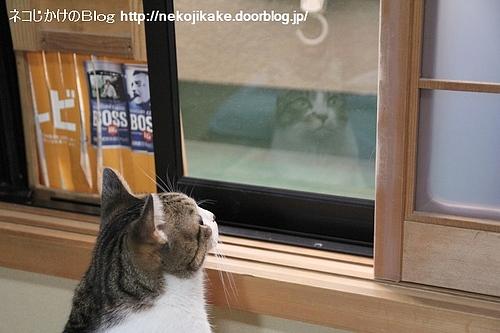 ガラスに映る顔。