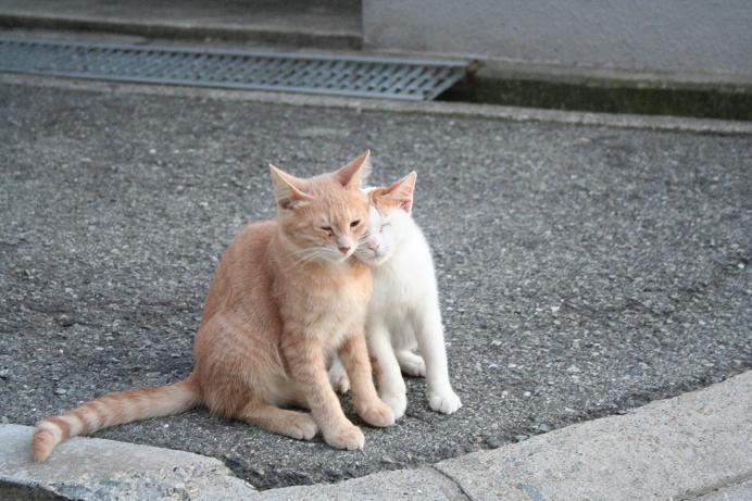 街の子ネコたち。近所
