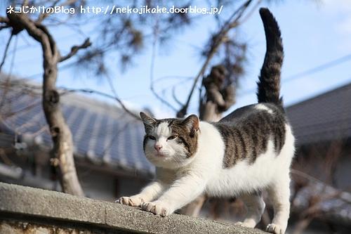 塀の上 空にそびえる 猫のしっぽ。