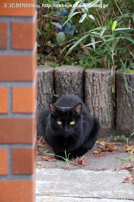2016120810黒ネコがこっち見てる。