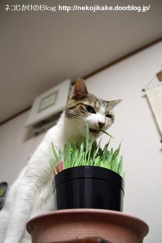 2013062801それでもやっぱり草が好き?