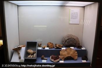 2018102120きのこ!キノコ!木の子!@大阪市立自然史博物館。16