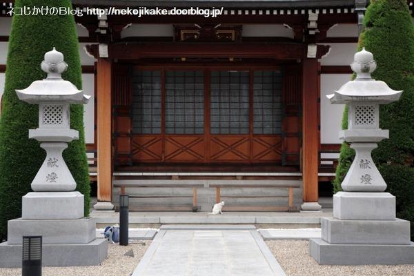 2014103102猫に引かれてお寺参り。