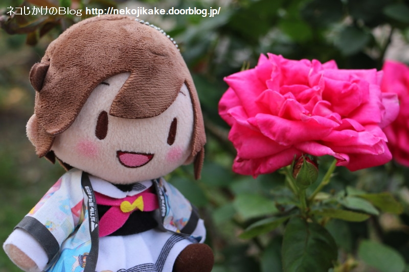 2019061910君にはバラが良く似合う。2