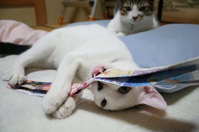 ネコ遊び。クロ