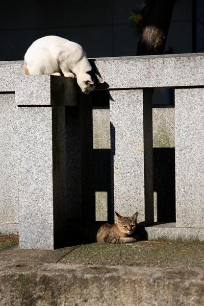がんばれ!その3 ミケちゃんとキジトラ子ネコ