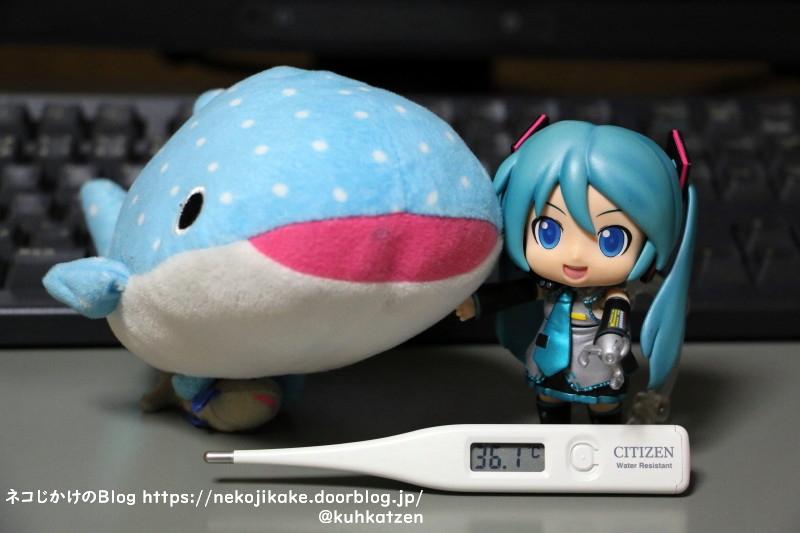 2021032502大きな魚が好きですか?1