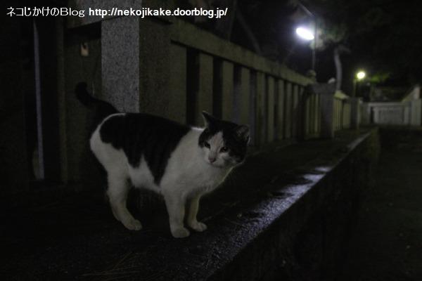 2014031802神社の猫。
