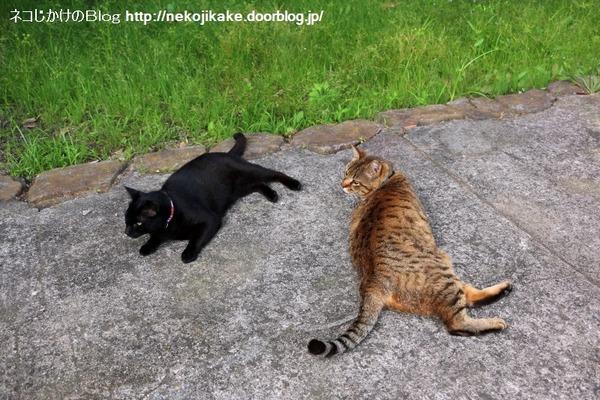 2016060913寝転んでナンボの猫の世界。5