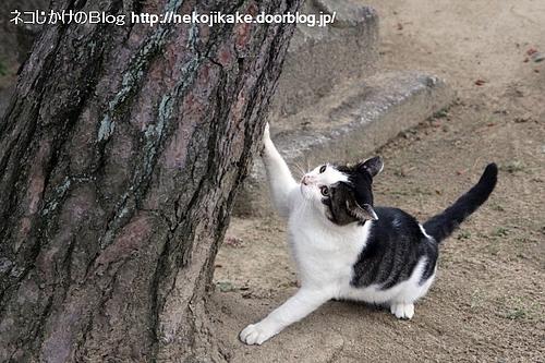 木が倒れるぞー。