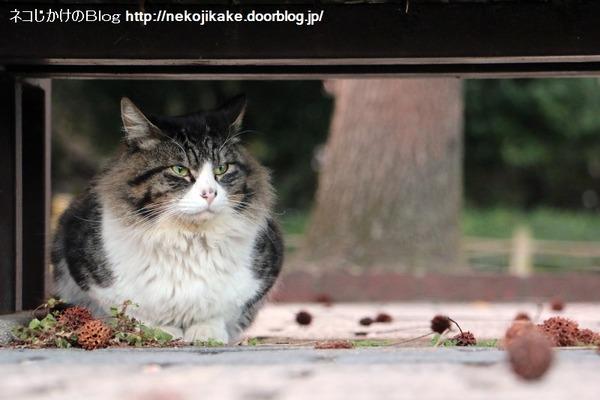 2015022005かっこつけたい猫たち3。