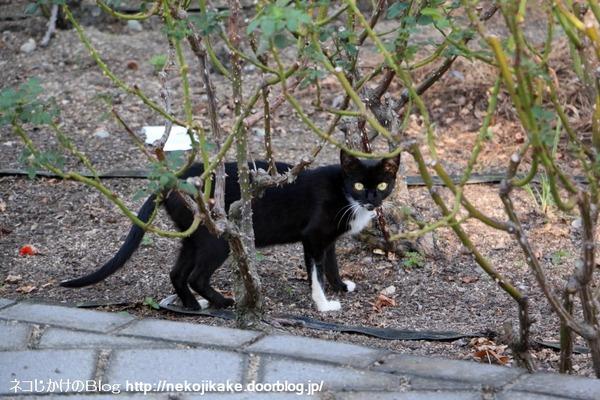 2016081005猫との対話。1