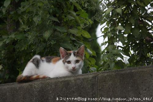 ミケ子ネコ。 ミケ子ネコ