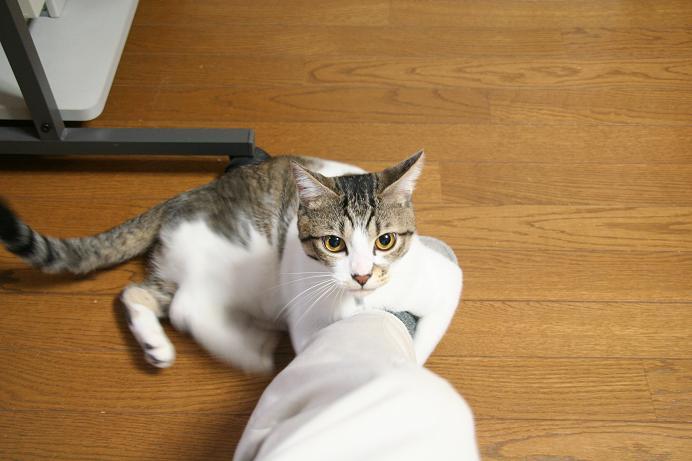 ネコキック、ネコキック。シマ