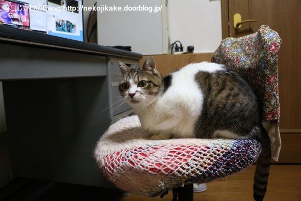 2016121003猫はなぜ椅子に座るのか。1