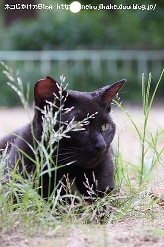 草原の覇者。