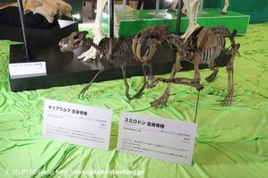 2017073012メガ恐竜展201@ 大阪南港ATCホール。10