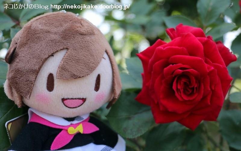 2018050508バラは気高く咲いて。1