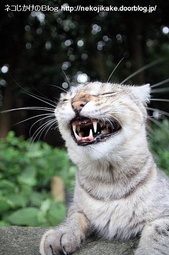 あくびの後ってこんな顔。