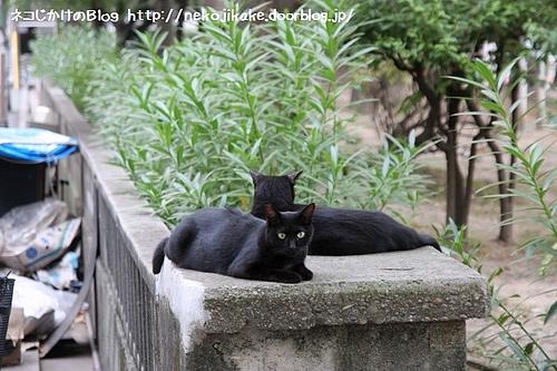 黒ネコの日。