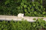 定点観察地の子ネコたち。白