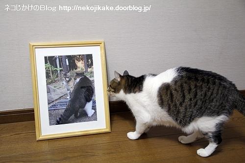 町猫2011@ギャラリーマゴット 作品1