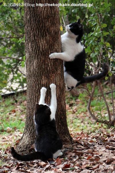 2016013016白黒の子猫。3