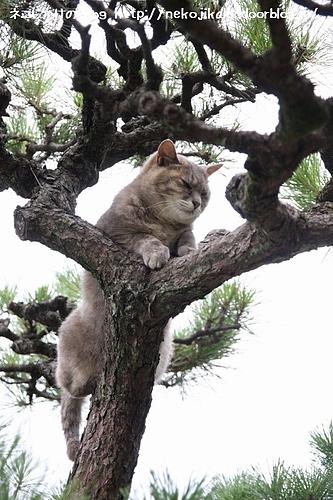 カナちゃん木に登る。